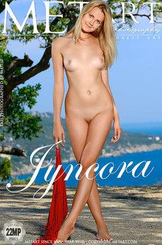 Jyncora